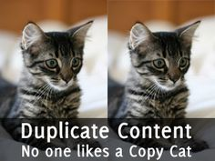 lolcats-duplicate-content